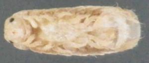 Imgp24452